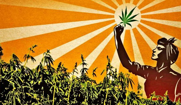 Alaska Politicians Disobey the Feds and Pass Law to Grow Commercial Hemp