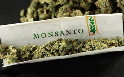 THE CORPORATE TAKEOVER OF CANNABIS: HOW MONSANTO & BAYER ARE GETTING IN ON MARIJAUNA