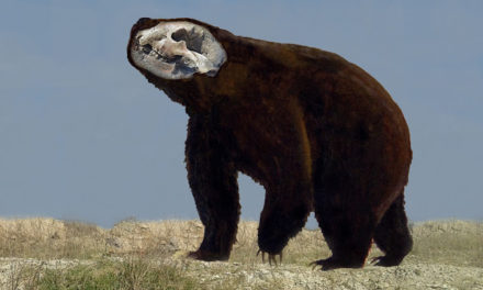 Giant Bear Of The Late Pleistocene Found In Buenos Aires