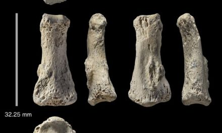 The 88,000-year-old finger bone that rewrites mankind's history: Human fossil found in Saudi Arabia suggests our ancestors spread out of Africa 20,000 years earlier than first thought