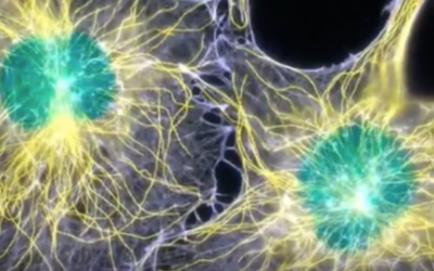 HOW YOUR CELLS USE LIGHT TO COMMUNICATE