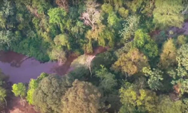 Oil Spill In Colombia Kills More Than 2,400 Animals