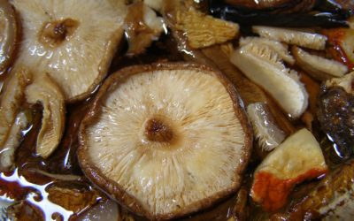 How To Make A Medicinal Mushroom Extract