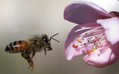EU To 'Completely Ban' Outdoor Use Of Pesticides Blamed For Devastating Bees