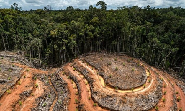 Exclusive New Video From Greenpeace Reveals Massive Deforestation In Indonesia