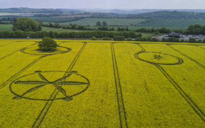 Crop Circle – Willoughby Hedge, Nr Mere, Wiltshire. Reported 8th May