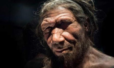 Spectacular Science! Lab-Grown Mini Neanderthal Brains Could Explain What Makes Humans Different