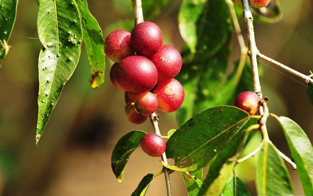 What Is Camu Camu Good For?