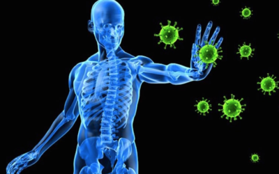 YOUR IMMUNE SYSTEM HAS A MEMORY
