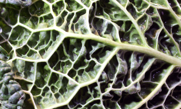7 Reasons to Get More Magnesium