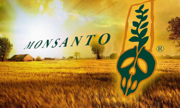 In blow to Monsanto, India's top court upholds decision that seeds cannot be patented