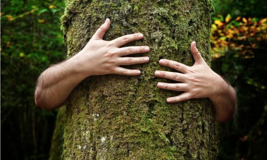 "SCIENTISTS DISCOVER THAT TREES HAVE A ""HEARTBEAT"" TOO"