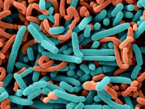 How Spore Probiotics Can Help Reverse Chronic Disease