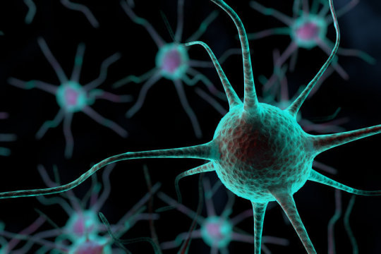 The neurons that rewrite traumatic memories