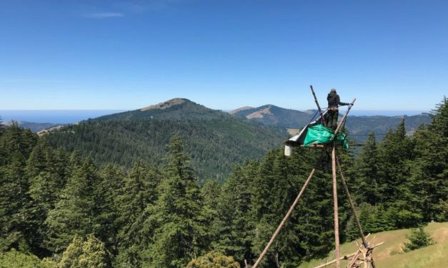 New Blockade in California's Mattole Forest Protects Old Growth from Timber Harvest Plans