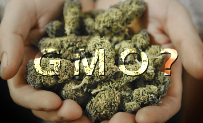 Are Monsanto and Bayer Really Trying To Take Over The Cannabis Industry?