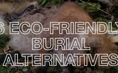 6 Eco-Friendly Burial Alternatives [VIDEO]