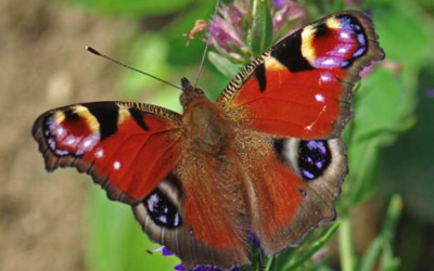 Butterfly numbers in the UK's woods have dropped by almost 60% since 1990