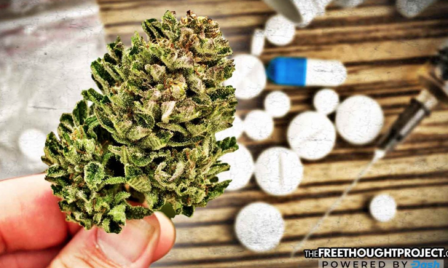 State Finally Looks at Science, Approves Use of Marijuana to Treat Opioid Addiction