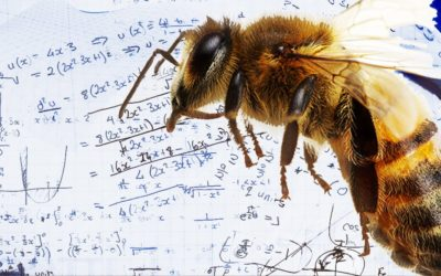 Honeybees Can Understand A Complex Mathematical Concept, Study Proves