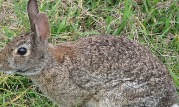 "AI ""Killing Machine"" Set to Poison Mammals in this Region: Rabbits and Cats"