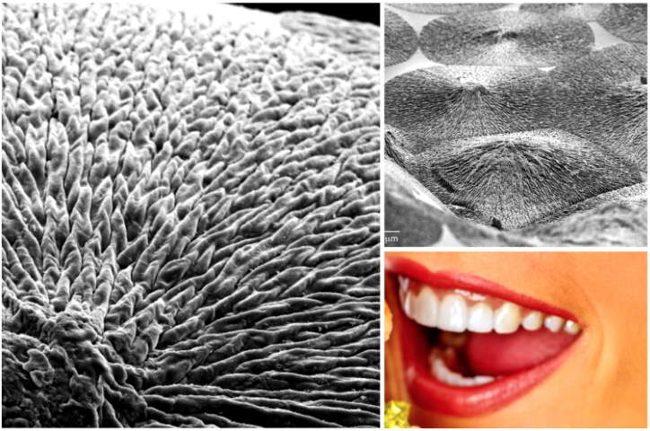 Scientists Just Developed NEW Material That Can Regenerate Dental Enamel