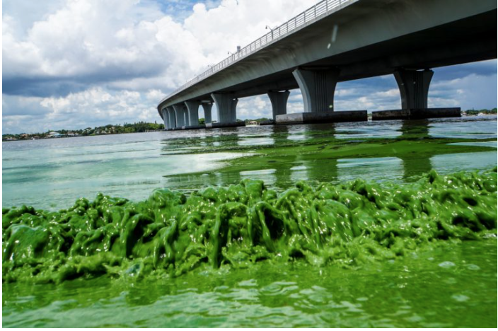 Toxic Algae: Causes of Florida's Environmental Disaster Denied by Media and Authorities