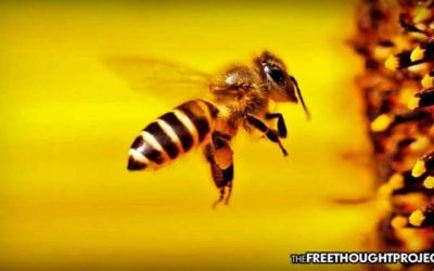 To Fight Bee Die-Off, State Now Offering All Citizens Their Own Beehives