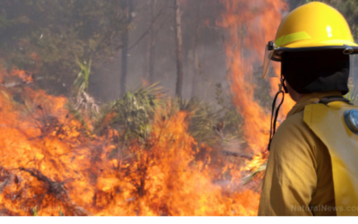 California residents break out in bizarre rashes and bumps after forest fires burn