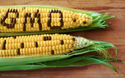 "The myth of ""substantial equivalence"" of GM crops shown to be false"