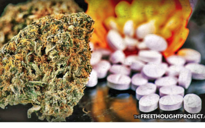 Precedent Set as Court Orders Gov't to Pay for Medical Pot Instead of Opioids for Worker's Comp