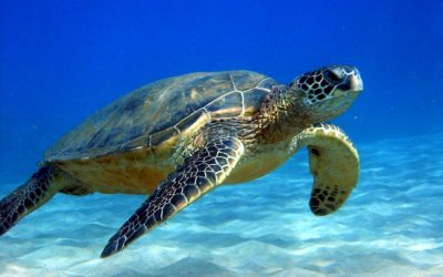 Federal Agencies Propose Major Changes to Endangered Species Act