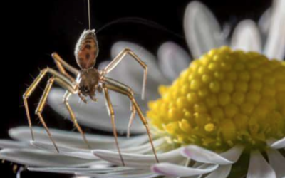 Spiders can FLY using electricity in the air, allowing them to travel thousands of miles on windless days