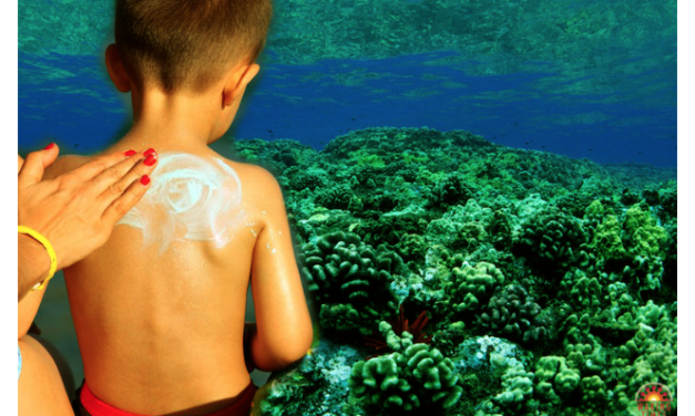 Hawaii Bans Most Sunscreens In Effort To Save Dwindling Coral Reefs