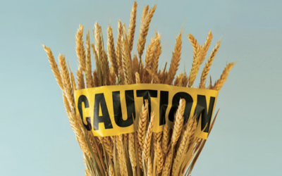 EATING MODERN WHEAT FUELS GROWTH OF HARMFUL GUT BACTERIA, STUDY SUGGESTS