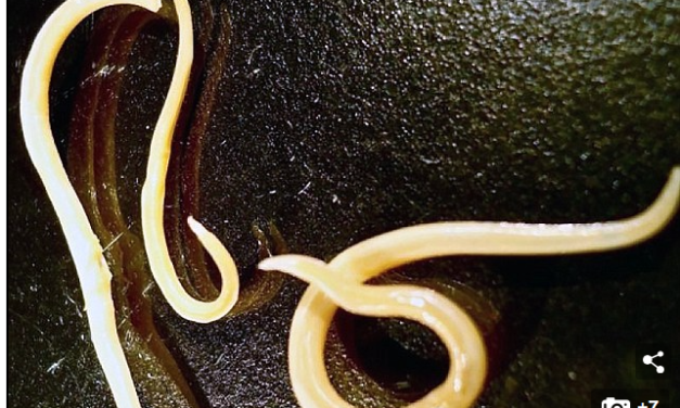 Worms frozen during an ice age 42,000 years have been brought back to life by scientists, fuelling hope for human cryogenic freezing