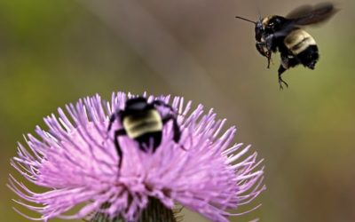US Government  administration lifts ban on pesticides linked to declining bee numbers