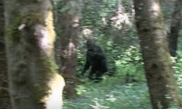 THE MOUNT ST. HELENS BIGFOOT COVER-UP