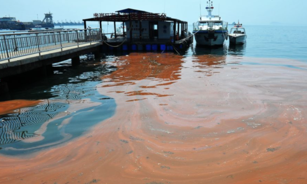 The Grotesque Truth About FL's Red Tide Disaster: Lake O' Green Algae Dumps To Blame
