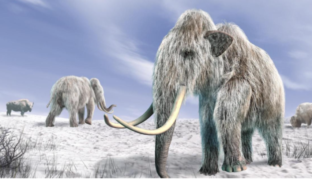 Controversy Surrounding The 'Ice Age' – Did It Actually Happen Like We Think It Did?