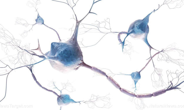 """Extracts from a traditional African tree called """"False Iroko"""" found to be effective at treating neurodegenerative disease"""