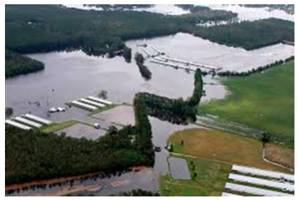 Concentrated Animal Feeding Operations (CAFOs) in North Carolina. Pollution of Soil, Air and Water In the Wake of the Hurricane