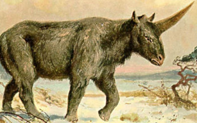 A Fossilised Skull Has Revealed When The Last 'Siberian Unicorn' Lived on Earth