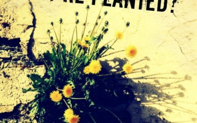 Bloom Where You're Planted: Be Prepped No Matter Where You Live or What Your Situation Is