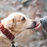 FDA And CDC Issue Separate Warnings For Pet Owners Including Bacteria Resistance