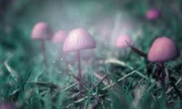 Magic Mushrooms: New Research on Psilocybin and Its Benefits