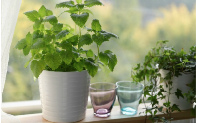 3 (More) Easy To Grow Medicinal Plants For Your Home And Garden