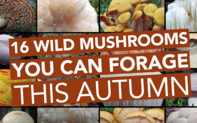 16 Wild Edible Mushrooms You Can Forage This Autumn [VIDEO]