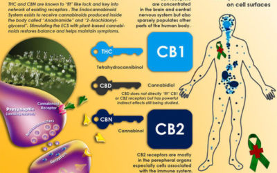 The Endocannabinoid system: Most medical schools don't train students about the second largest neurotransmitter system