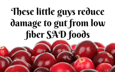 Cranberries Found To Counteract Damage From Eating SAD Foods